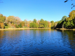 75.12 Acres, Excellent hunting and recreation property with 3 acre lake