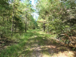 65.32 Acres of wooded land