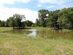 67.98 Acres, 2 stock ponds, fenced, and crossed fenced, paved road frontage